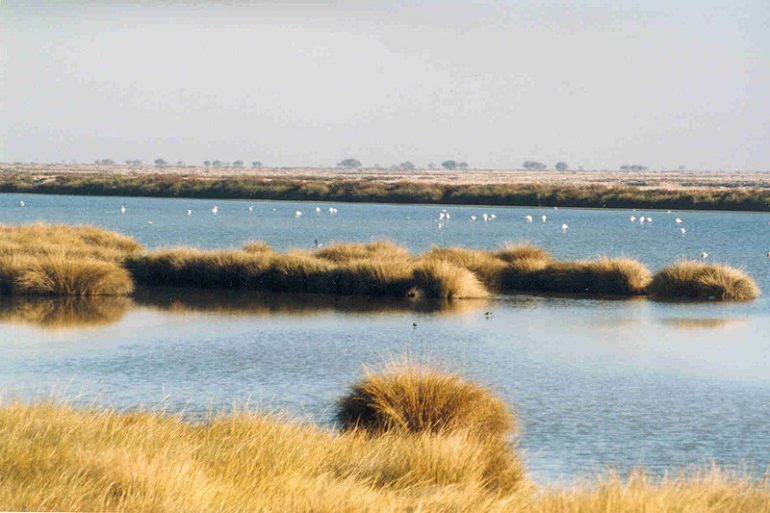 Doñana Wetlands, Spain