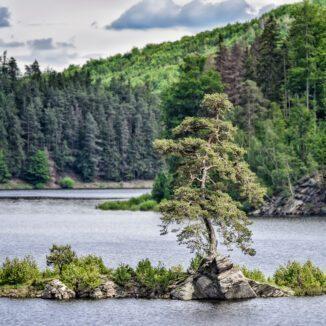 Guardian of the Flooded Village in Czech Republic, European Tree of the Year 2020. Image: Marek Olbrzymek via Tree of the Year