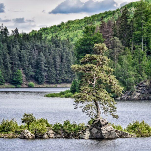 Guardian of the Flooded Village in Czech Republic, European Tree of the Year 2020. Immagine: Marek Olbrzymek via Tree of the Year